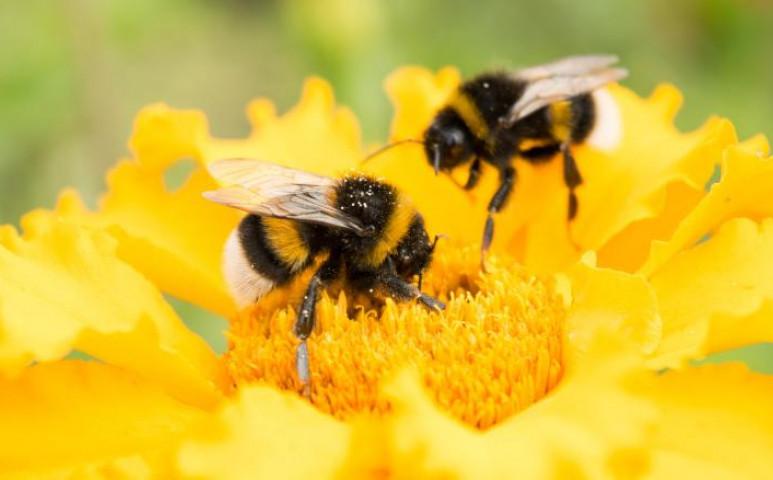 Ezeket a virágokat ültesse, hogy jöjjenek a méhek