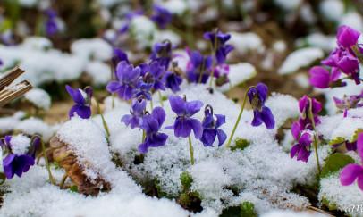 Tavaszi havazás