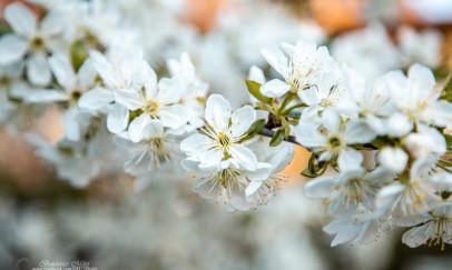 Beköszönt a tavasz