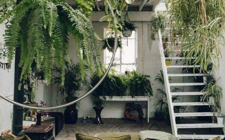 Beltéri kertészkedés kisokos - tippek, trükkök, hasznos alapok