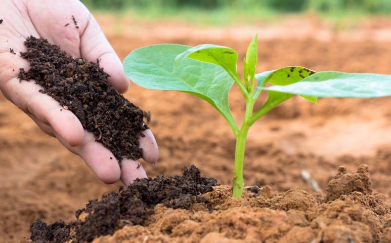 Banán, kávézacc, tojáshéj-ne dobja ki, használja fel a kertjében!