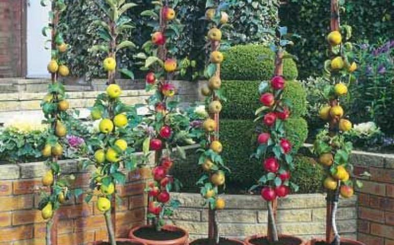 Nem csak zöldséget, gyümölcsöt is nevelhet a balkonon!