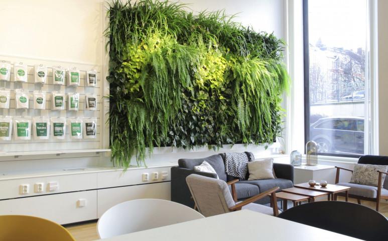 Legyen egy egész fala növényekkel borítva - ez biztosan helytakarékos megoldás!