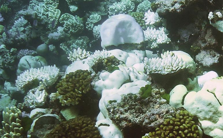 Ez lehet a megoldás a korallfehéredés ellen