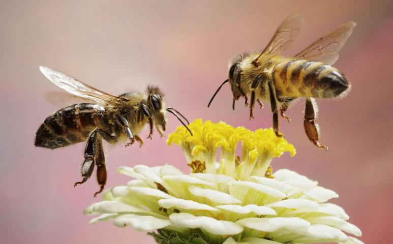 A méhek alkalmazkodnak a klímaválság egyes részeihez, és ez nekünk is jó!