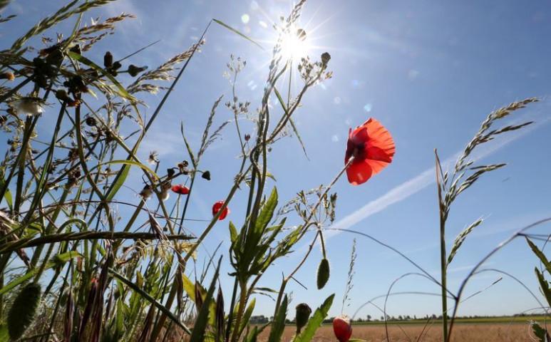 Belgium vízkorlátozásra kényszerül az elképesztő aszály miatt
