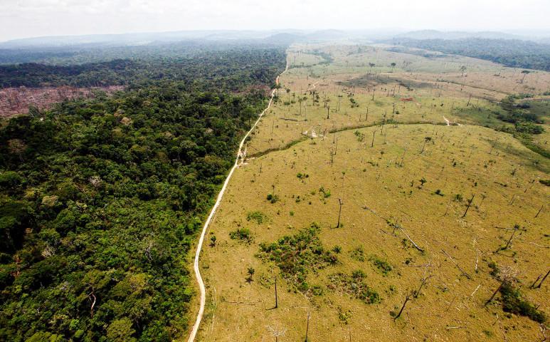 Kipusztulhat Haiti élővilága, ha nem tesznek semmit az erdőkért!