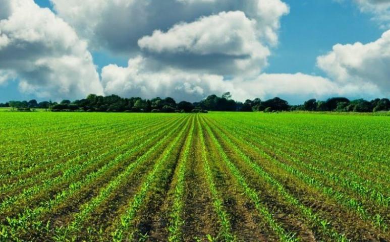 A biofarmokon sokkal több a rovar, mint a hagyományos művelésű területeken