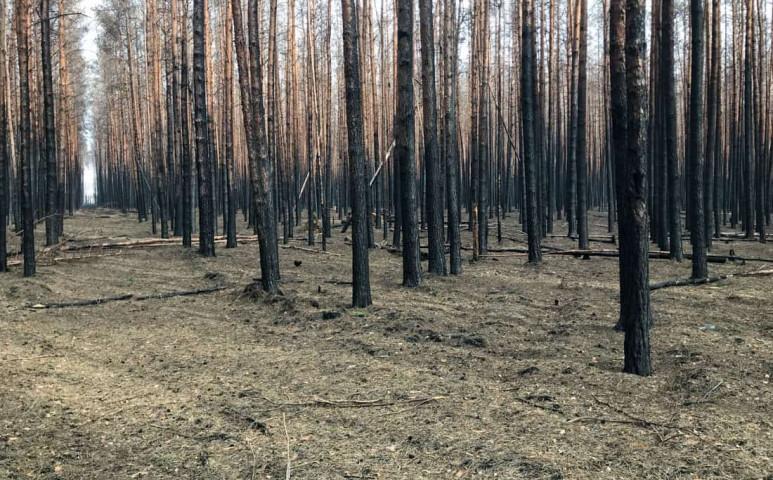 Egyre alacsonyabbak az erdőink a klímaváltozás miatt