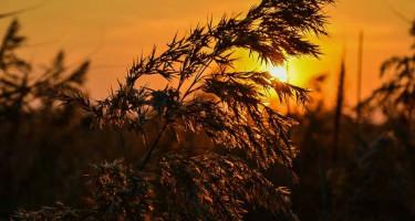 Kora őszi naplemente
