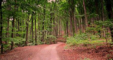Erdei út kora ősszel