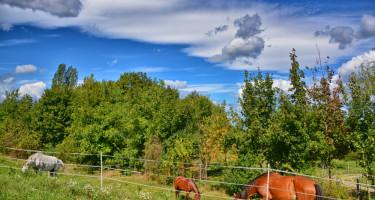 Legelésző lovak az erdő szélén