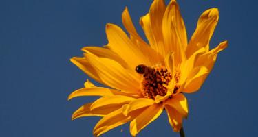 Dolgos méh a kora őszi napfényben