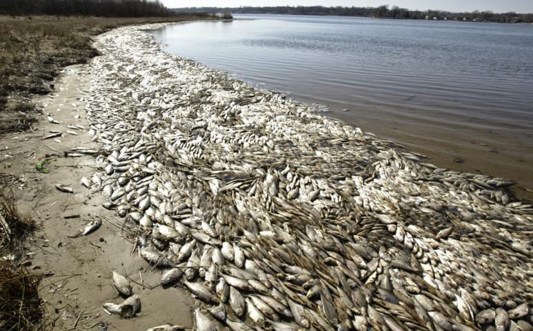 Újabb oxigénhiányos helyzet alakulhat ki a Mexikói-öbölben