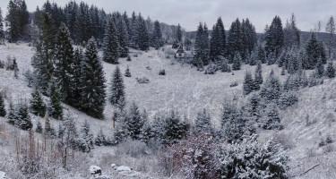 Lepelnyi hó az erdőben