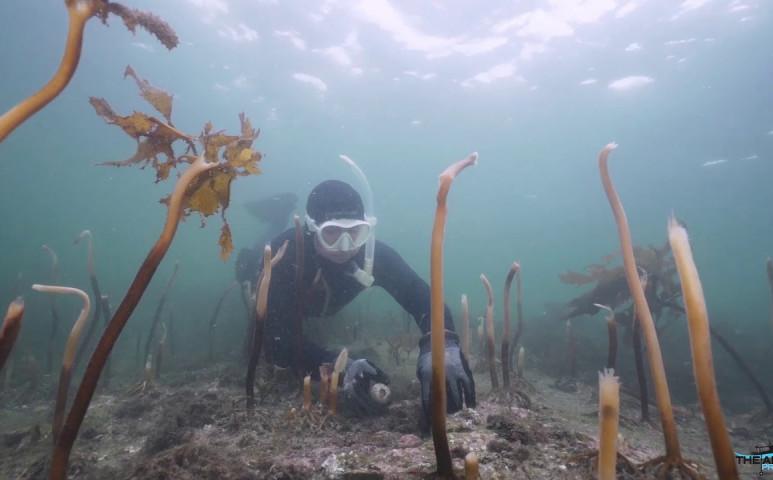 Durva pusztulási hullám söpör végig a Sydney-i vizeknél