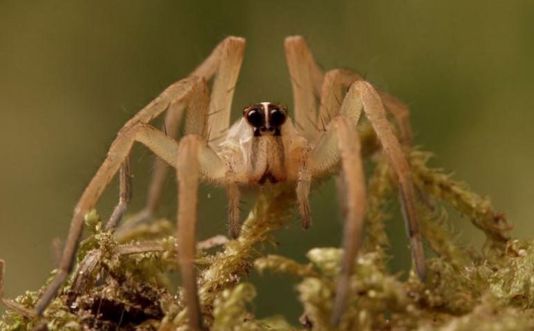 Elszaporodnak a pókok az Északi-sarkon