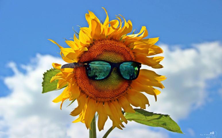 Országos hőség, sok napsütés