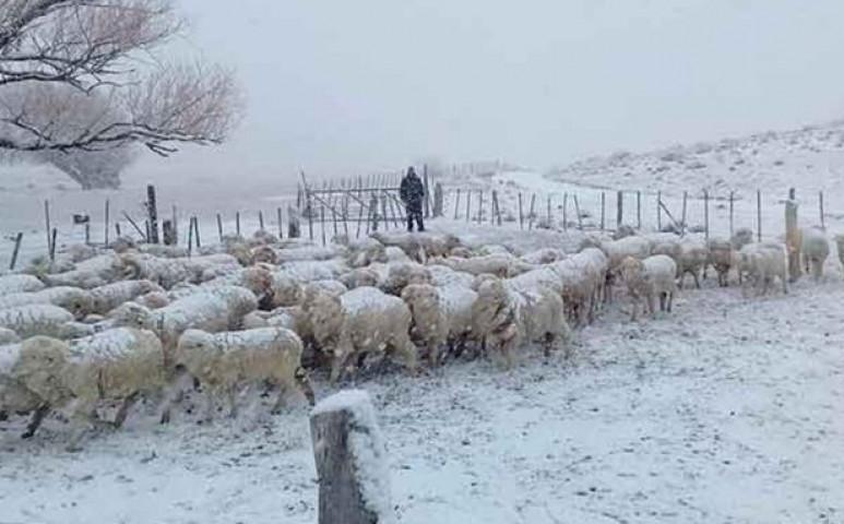 Mezőgazdasági vészhelyzet alakult ki Patagóniában a kemény tél miatt