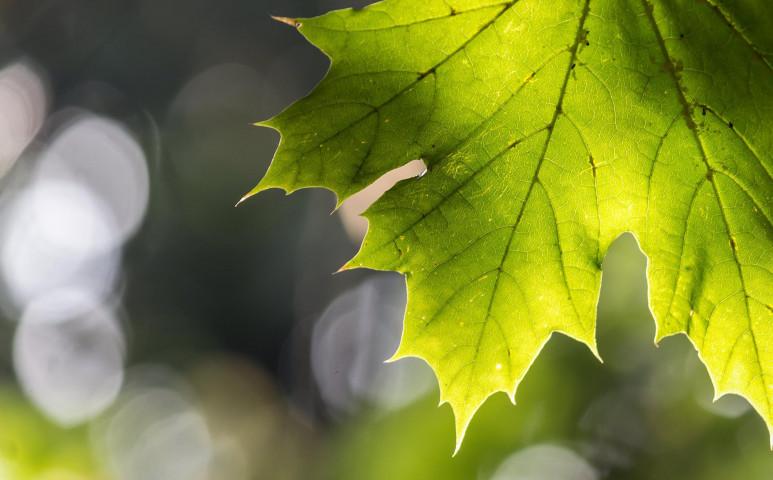Közeleg az őszi fordulat!
