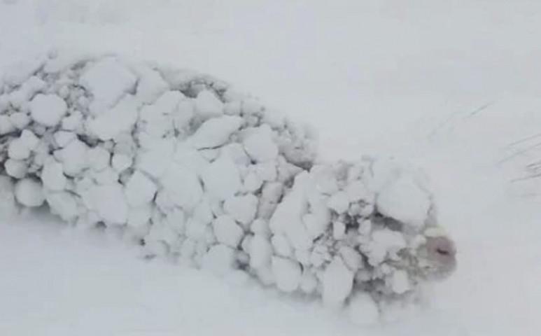 Brutálissá vált a tél Patagoniában