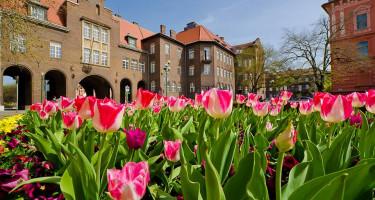 Tündöklő tulipánok