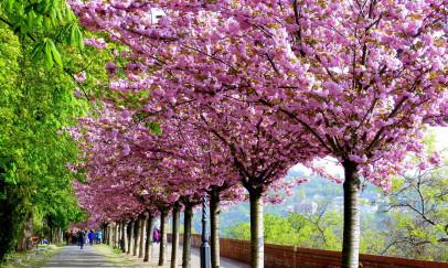 Séta a tavaszi sétányon