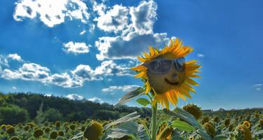 Védekezzük a nap ellen! :)