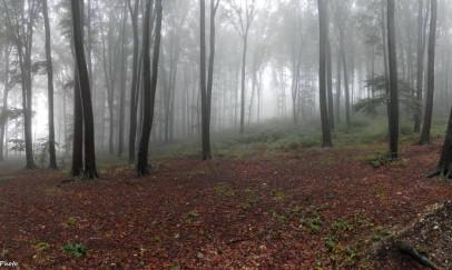 Az őszi erdő mélyén