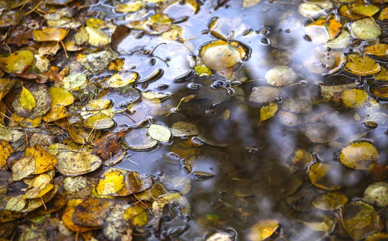 A jövő hétvége meghozhatja a borongós, hűvös őszi időt