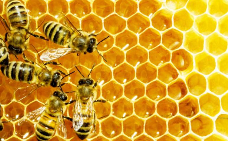 Van remény: megmenekülhetnek a méhek!