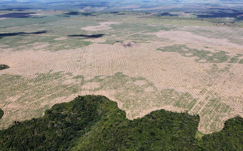 Egyre nő az esőerdőktől elvett terület…