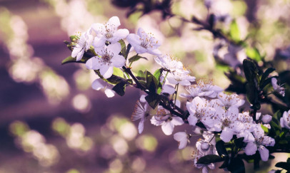 Tavaszi szirmok