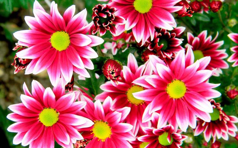 Dobja fel ősszel is színes virágokkal otthonát