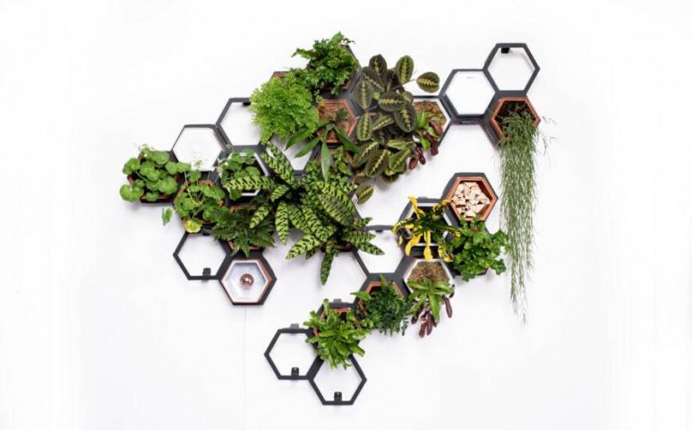 Így kell stílusosan a falra tenni a növényeket