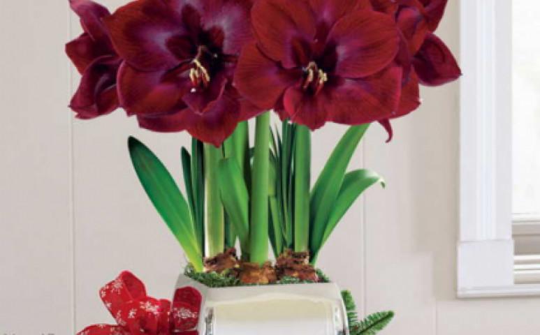 Díszítse karácsonykor virágokkal otthonát