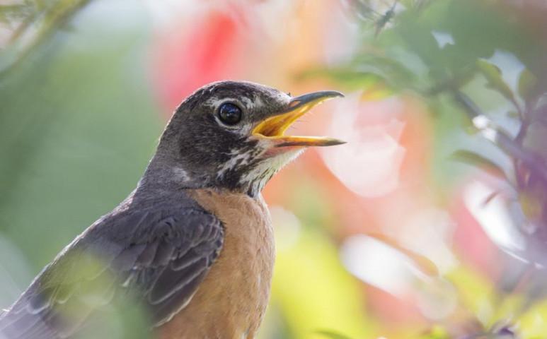 A mesterséges fény és a zaj is jelentősen hozzájárul a madarak pusztulásához