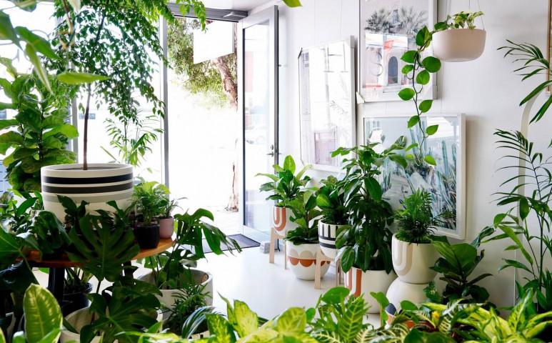 Így ne nyírjuk ki a növényeinket télen