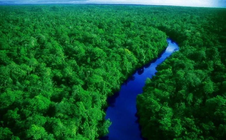 1 millió focipályányi erdőt vágtak ki az esőerdőkből egyetlen év alatt