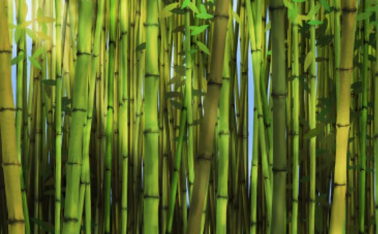 Fenntartható ruha? A válasz a bambusz lehet
