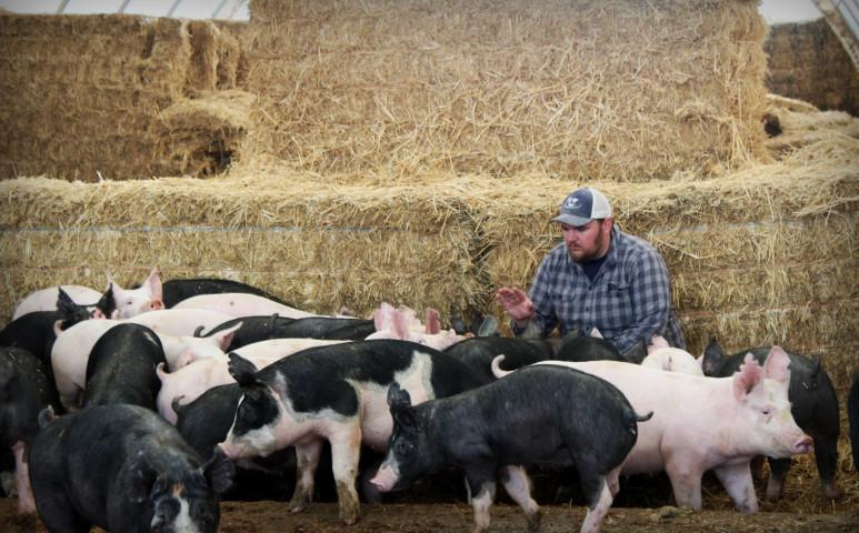 Az állatok által termelt metánnal fűteni is lehetne