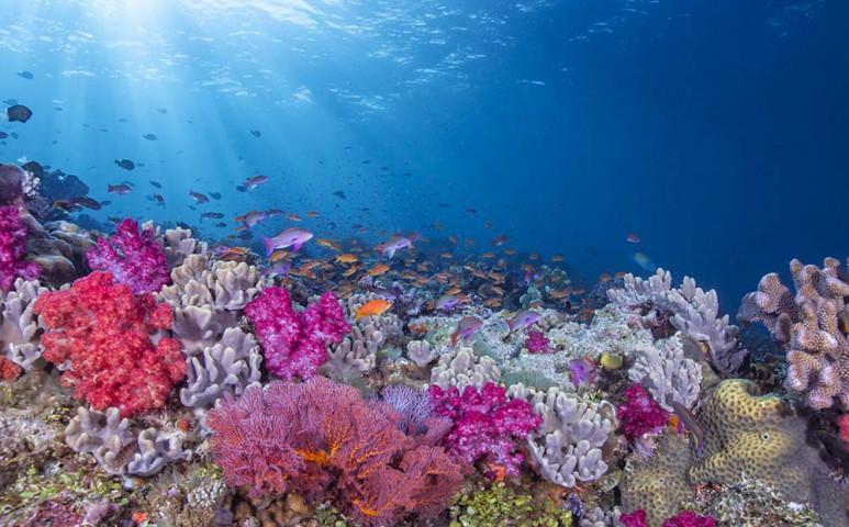 Ellenállóbbak lettek a korallok a hőmérséklet emelkedésével szemben