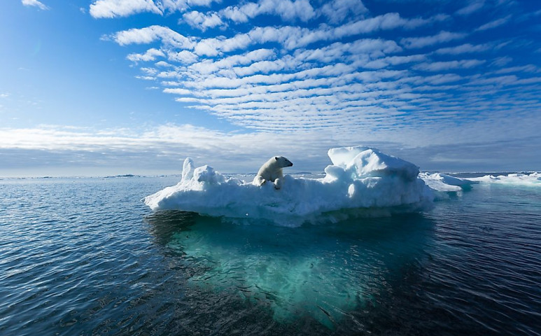 Olvadó jéghegyeket utánzó betűtípussal igyekeznek felhívni a világ figyelmét a jégolvadás tragédiájára