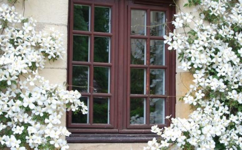 Virágot minden ablakba - ez a méhek életének egyik kulcsa
