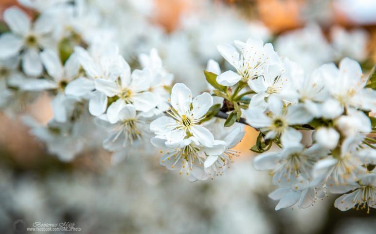 Láthatáron az igazi tavasz!