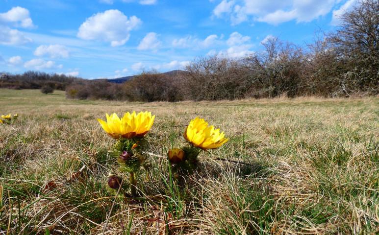 Csütörtökön többfelé 20 fokos tavaszi meleg