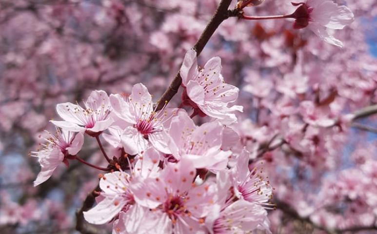 Kellemes tavaszi idő - de csak péntekig
