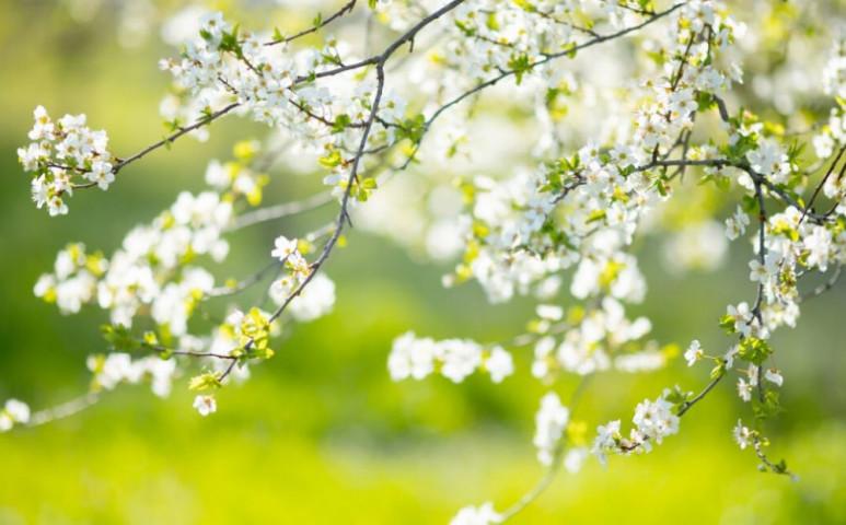 Április végéig tavasz, utána hidegbetörésre lehet számítani
