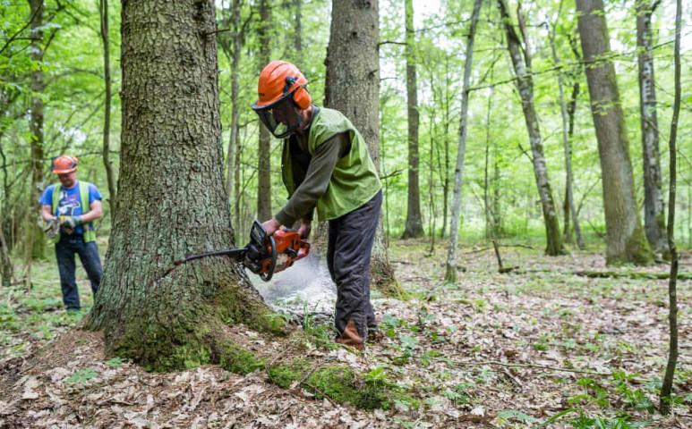 Magyarországnyi területről tűntek el az erdőségek tavaly