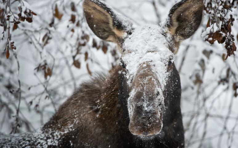 -50°C-os hideget várnak Alaszkában